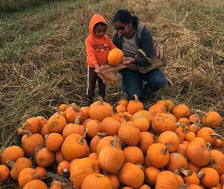 Woman and Boy Choosing a Pumpkin